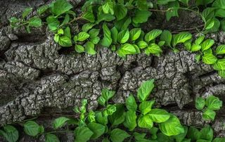 Image plantes