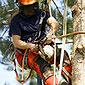 Elagueur grimpeur professionnel