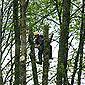 grimpeur dans les feuillages