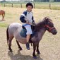 Clubs d'équitation à BRUXELLES