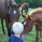Equitation en province du LUXEMBOURG