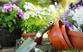 Pots et fleurs avant embellissement