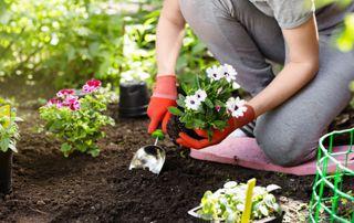 Calendrier d\'entretien par saison de votre jardin
