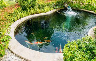Une pièce d'eau pour embellir son jardin