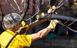 Ouvrier élague branches