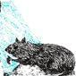 dessin de rat mangeant du raticide