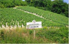 Chablis Les Vénérables Vieilles Vignes 2009