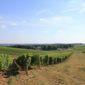Photo d'une vigne de vin pouilly
