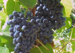 Vins de Loire sur TheWineAgency