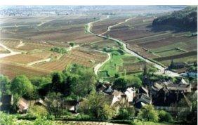 Bourgogne Pinot Noir 2009 Domaine Coillot & Fils