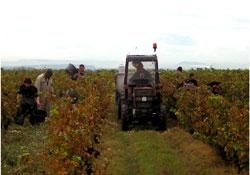 Les grands vins de Bourgogne