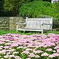 Banc blanc et fleurs roses