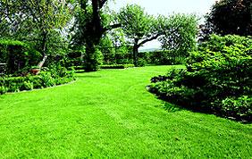 belle pelouse tondue dans grand jardin